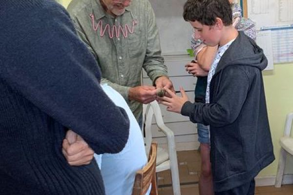 Preparing a Blackcap for release