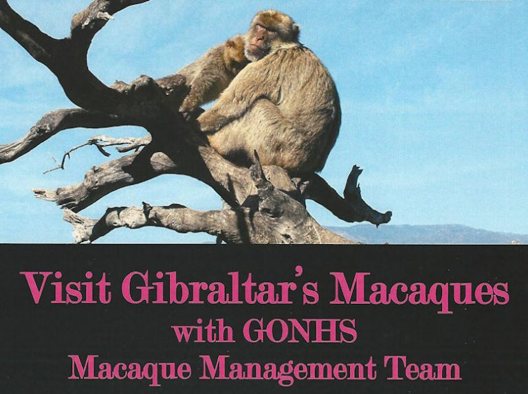 Macaque Outing