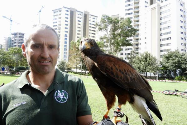 Shane Shacaluga with a Harris Hawk